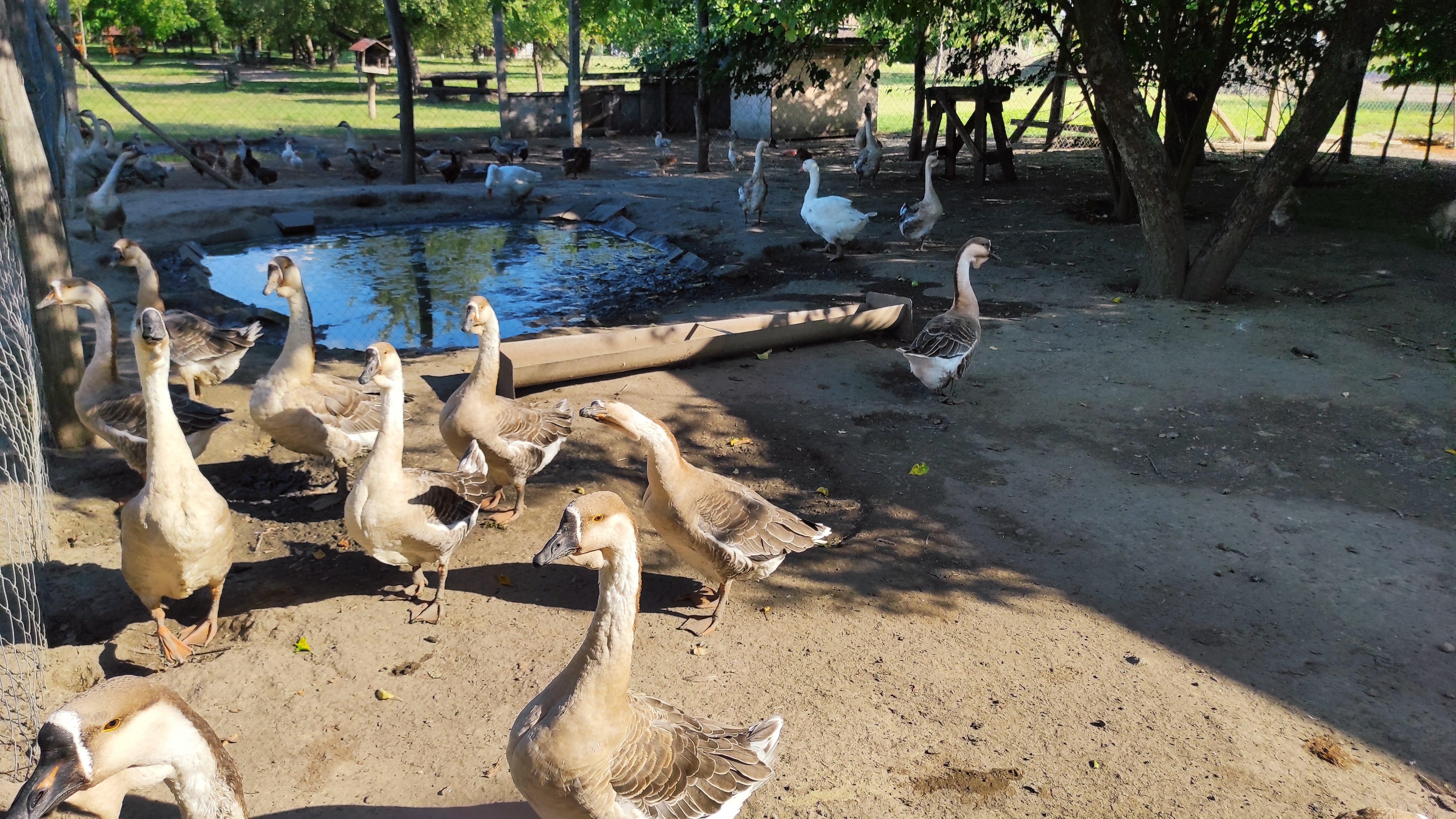 Kirandulastervezo-Hatvan-Vadaspark-4.jpg