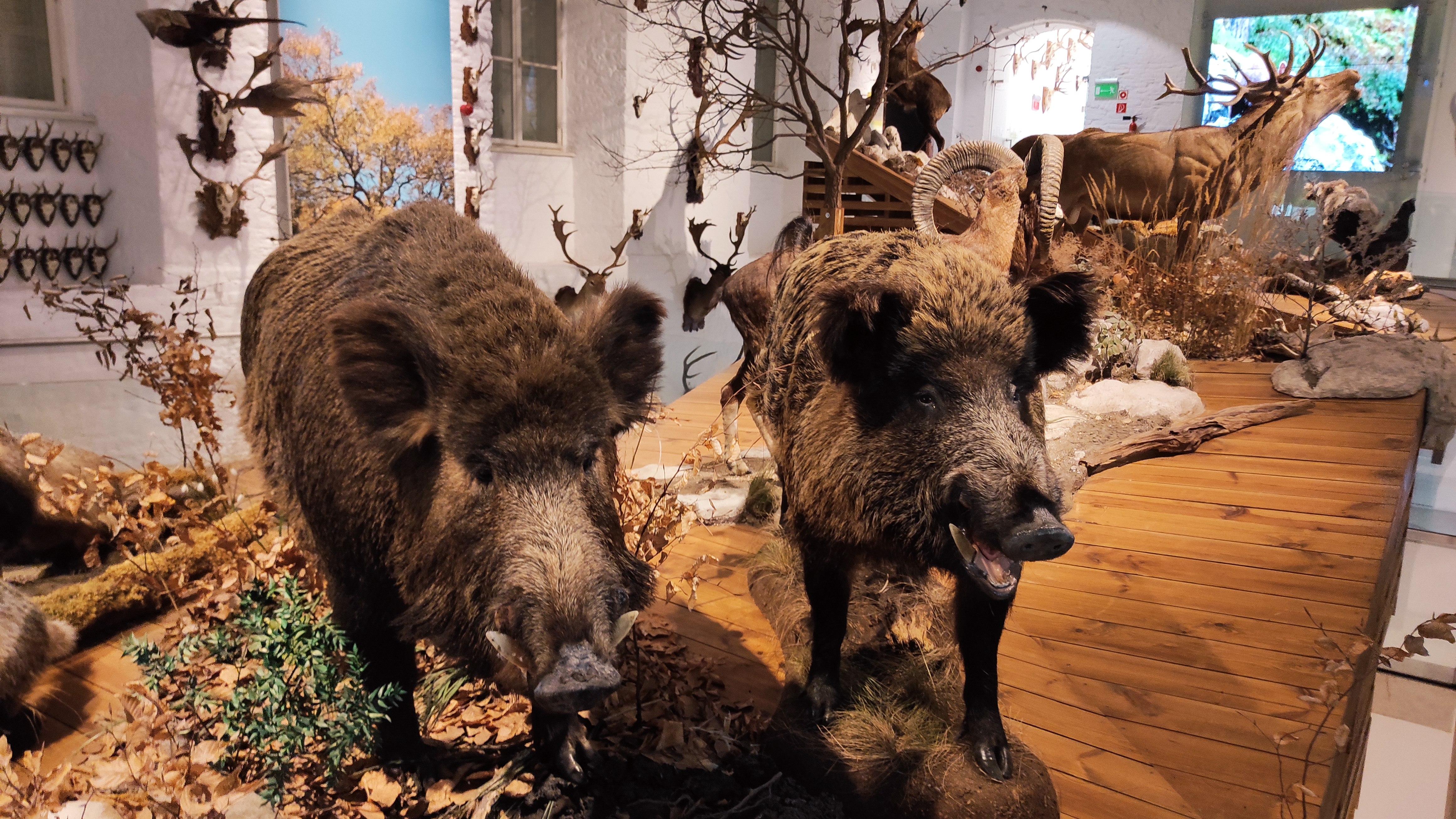 Kirandulastervezo-Hatvan-Vadaszati-Muzeum-5.jpg